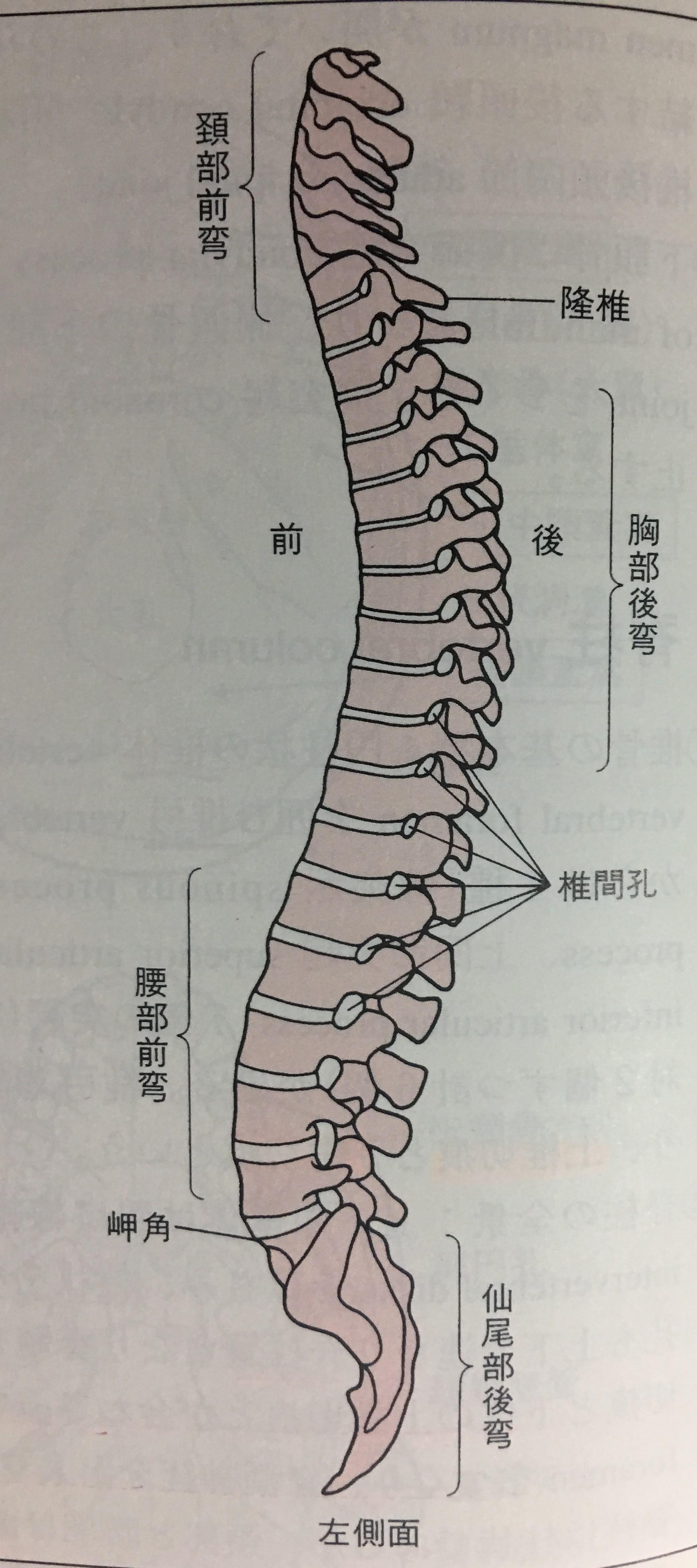 首 左側 痛い